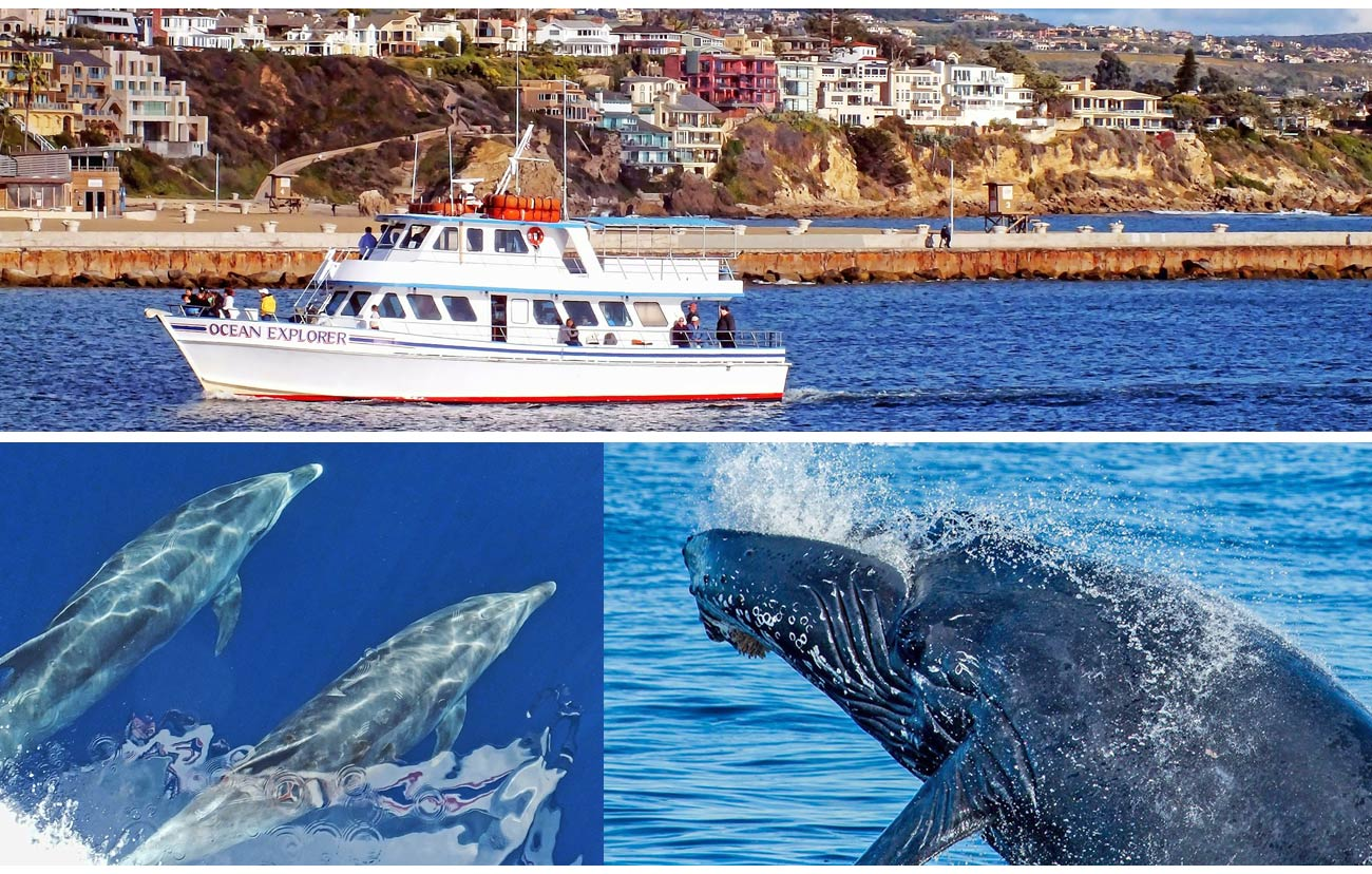 During The Winter And Spring Whale Watching Long Beach Visitors Will Have Opportunity To Witness Annual Grey Migration Which